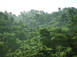 Above the Jungle UE4