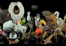 Taxidermy 3D Collection