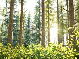 Blueberry Pinetree Forest