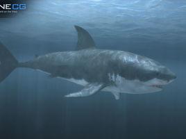 Animated Great White Shark