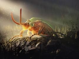 Lovely striped love beetle