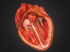 Realistic Looking Medium Poly 3d Animated Heart - My workflow and a small message
