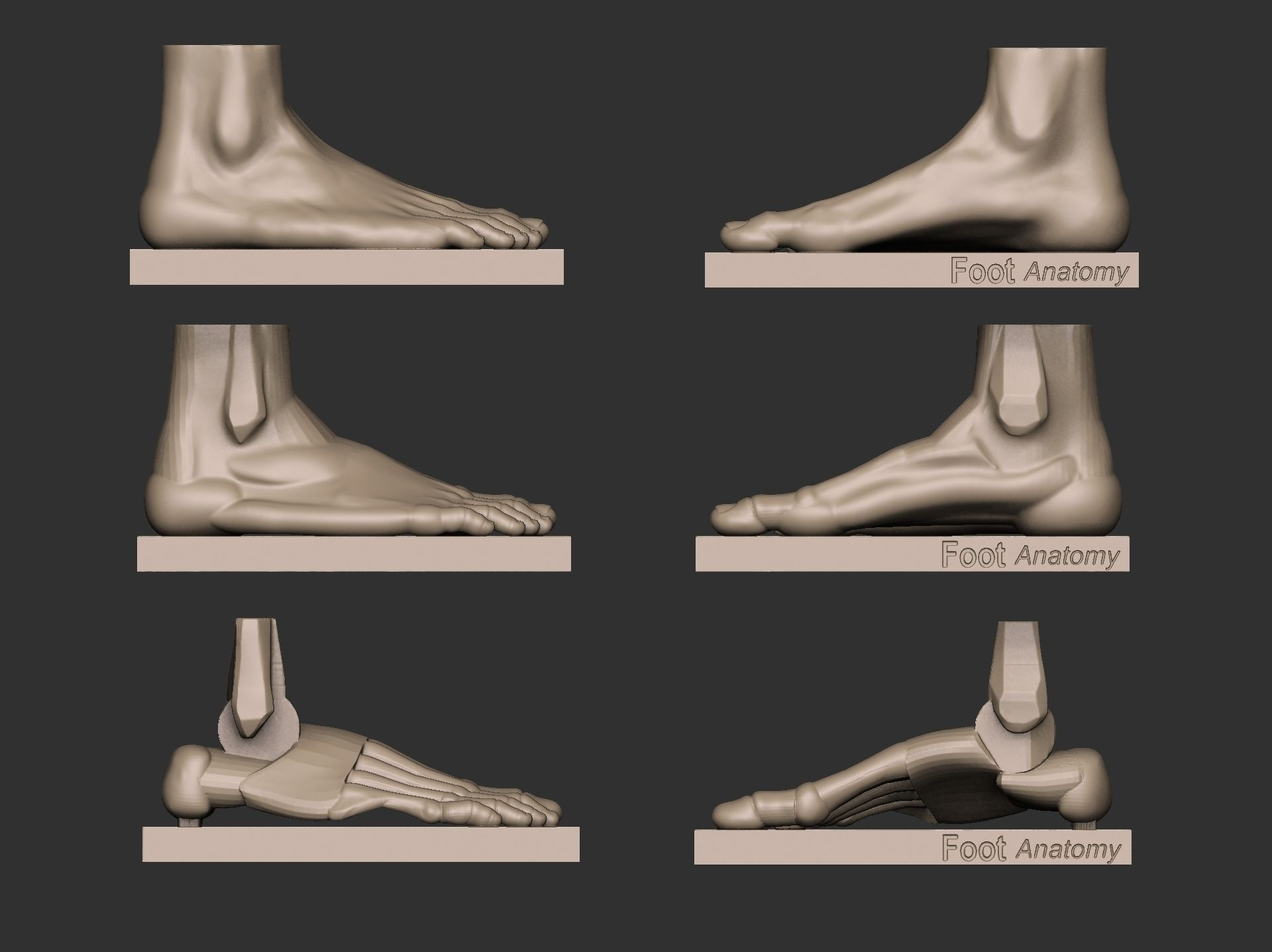 Foot reference 3D print model | CGTrader