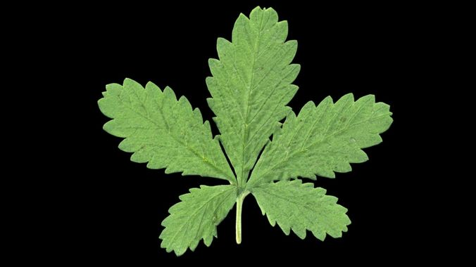 plant leaf 3d model max obj mtl 3ds fbx 1