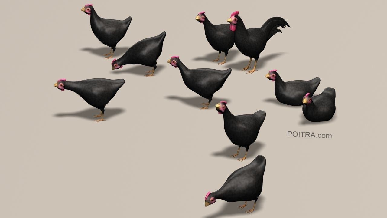 Chicken Ranch - Rooster and 9 Posed Hens - Black -