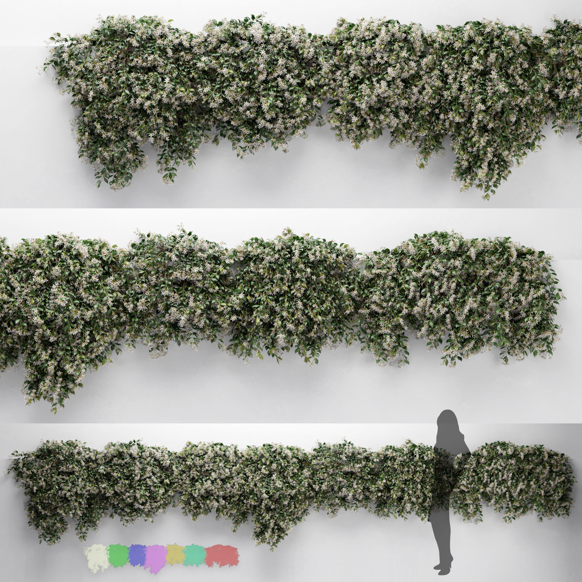 Hanging Plant - ChoisyaTernata - 7 Modular Pieces