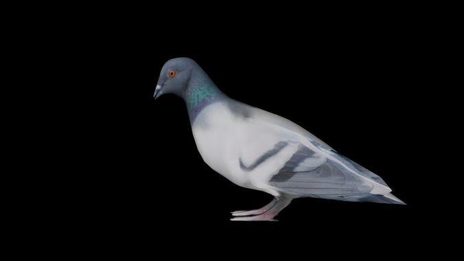 low poly pigeon rigged 3d model obj mtl 3ds fbx blend dae 1