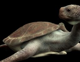 3D model animated game-ready Turtle