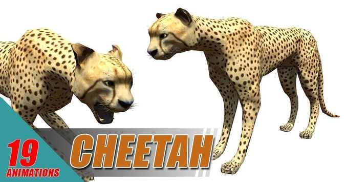 cheetah lowpoly 3d model low-poly rigged animated fbx blend 1