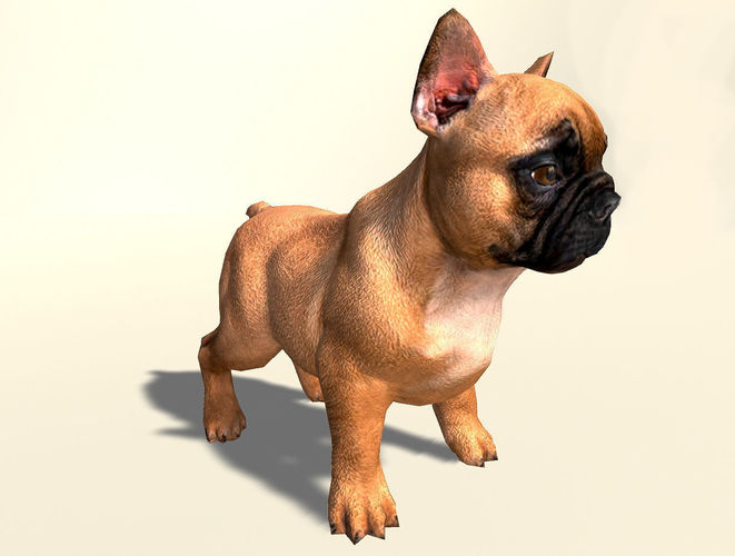 pug dog  3d model low-poly rigged animated fbx unitypackage prefab 1