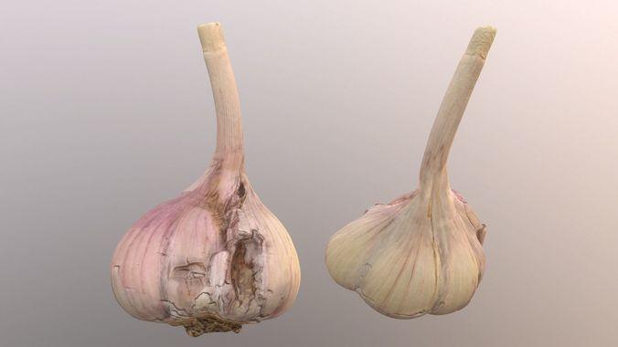 garlic 3d model max obj mtl fbx 1