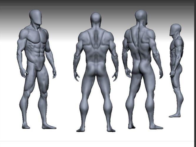 male anatomy modeler 3d model low-poly obj mtl fbx ztl 1