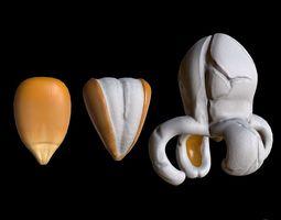 popcorn kernels 3D asset