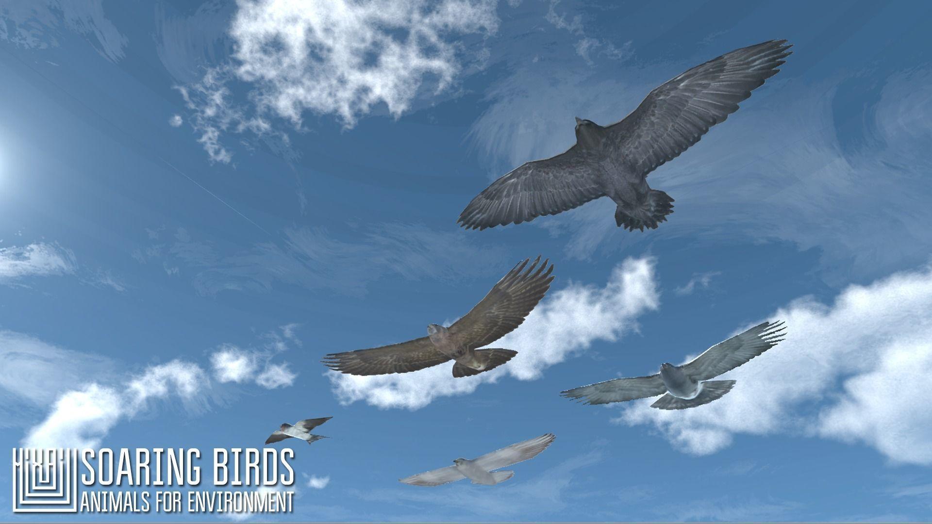 Soaring birds - animals for environment