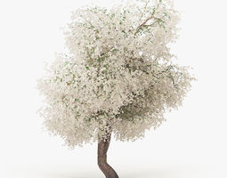 Flowering Apple Tree 3D