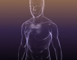game-ready human body - shape of a male 3d model