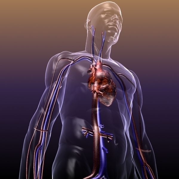 Nice Anatomy 3d Online Model Anatomy And Physiology Biology Images