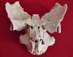 3d print model face - partial skeleton human