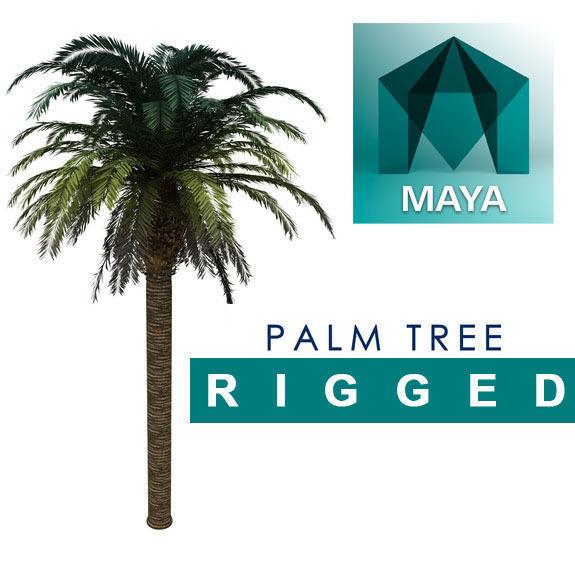HD Palm Tree Rigged