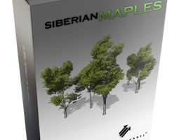 realtime 3d asset alpha channel studios siberian maple tree set animated