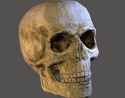 3D model low-poly Human Skull
