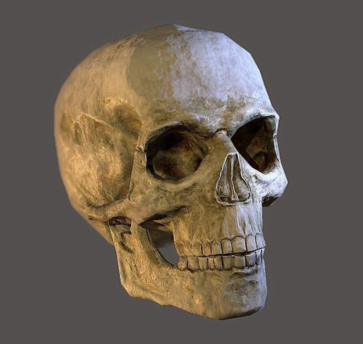 human skull 3d model low-poly obj fbx ma mb mtl tga 1
