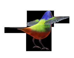 3d asset game-ready bunting bird