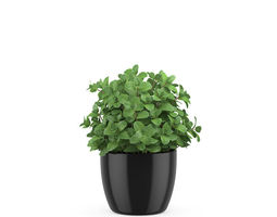 Mint in a pot 3D