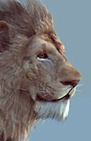 lion realtime model 3d model low-poly max fbx tga 1