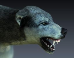 Gray Wolf 3D model rigged