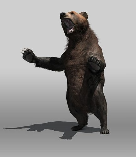 grizzly bear 3d model low-poly rigged max obj 3ds fbx stl mtl 1