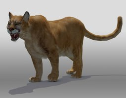 3D model Mountain Lion