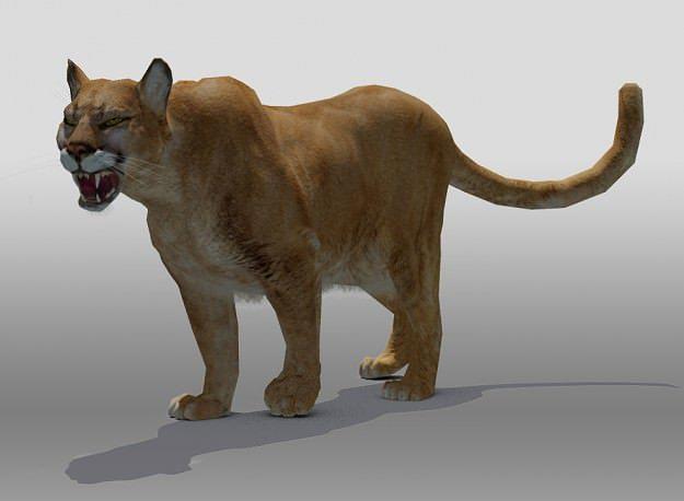 mountain lion 3d model rigged max obj mtl 3ds fbx tga 1