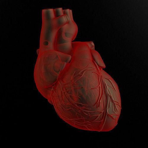 heart and body 3d model max obj mtl fbx 1
