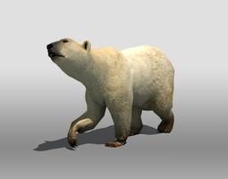 Polar Bear 3D asset