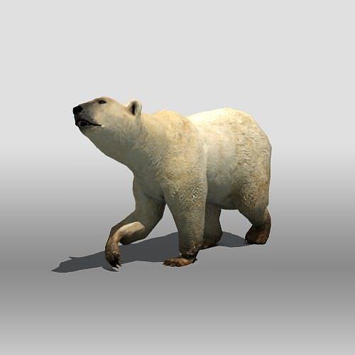 polar bear 3d model low-poly rigged max obj mtl 3ds fbx tga 1