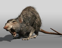 3d model VR / AR ready rat animal rigged