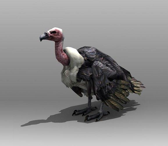 vulture 3d model low-poly rigged max obj mtl 3ds fbx tga 1