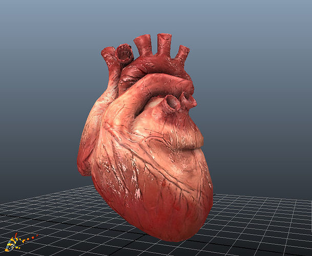 human hearts animated 3d model low-poly rigged animated fbx ma mb 1