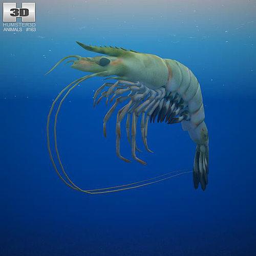giant tiger prawn 3d model max obj mtl 3ds fbx c4d lwo lw lws 1