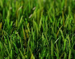 Grass Short A 3D