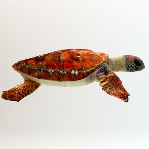 Loggerhead sea turtle 3D Model MAX OBJ 3DS FBX   CGTrader.com Turtle 3d Printing
