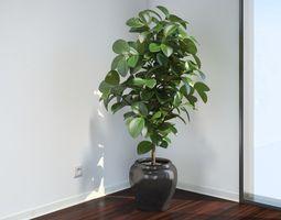 VP Ficus Elastica 3D model