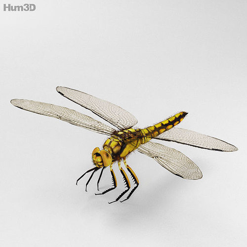 dragonfly high detailed 3d model max obj 3ds fbx c4d lwo lw lws 1