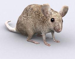 3DRT - Mouse 3D Model