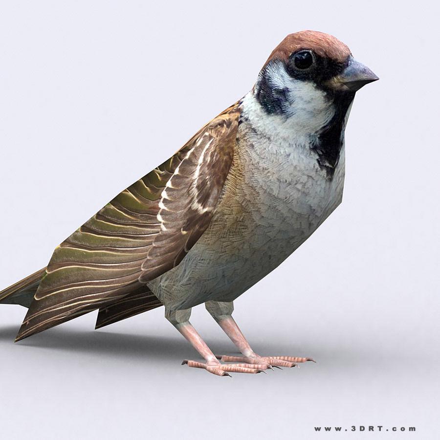 3DRT - Sparrow