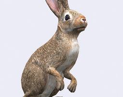 3DRT - Hare 3D Model