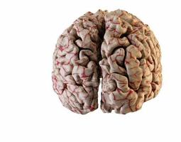 human brain 3d model stl