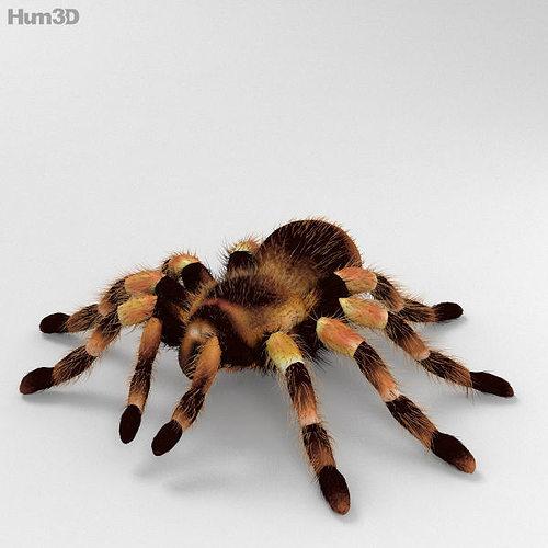 tarantula high detailed 3d model max obj 3ds fbx c4d lwo lw lws 1