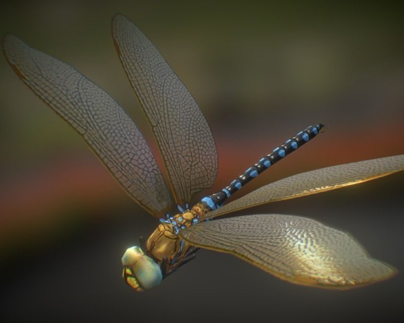 animated dragonfly 3d model cgtrader